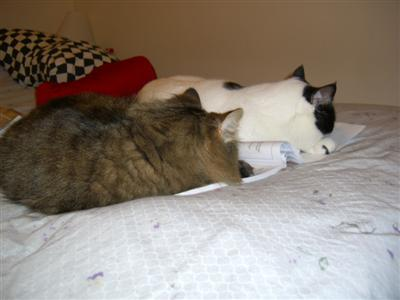 Ezzy and Fred sleeping on workbook
