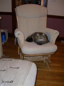Ezzy sitting in Kaya's chair