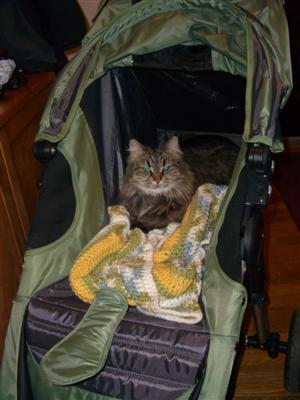 Kaya in the stroller.