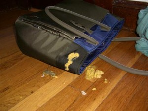 Cat vomit on work bag