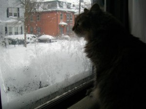 Ezzy at the window