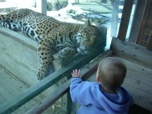 Josie and the jaguar
