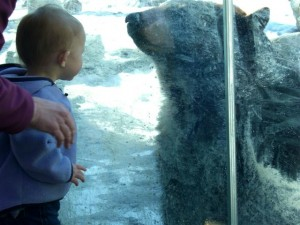 Josie and the black bear