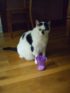 George checks out the sippy cup