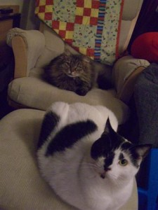 Ezzy and Fred relax in front of the TV