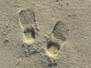 Josie's foot prints in the sand