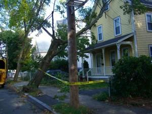 fallen tree 2 (Small)