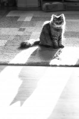Ezzy in the sun