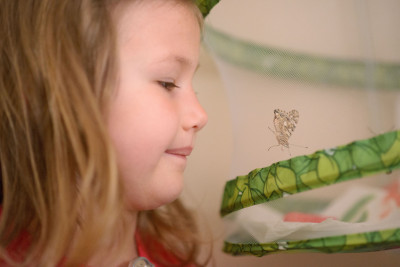Josie examining the first butterfly