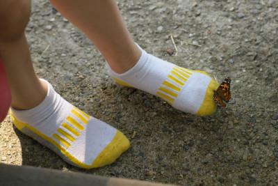 Butterfly on Zach's sock