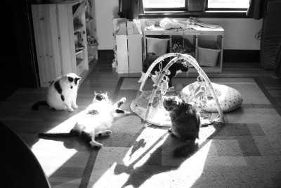 The cats fighting over the sun spots